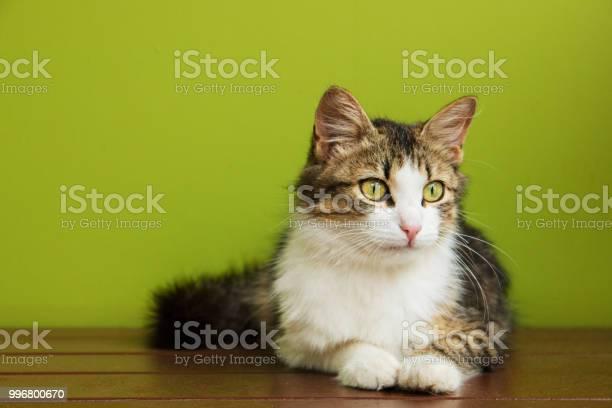 Cat woman lies on a bench on backdrop of green background picture id996800670?b=1&k=6&m=996800670&s=612x612&h=4ysrobtwayizbvodnu fqc1b8snx8xqi284r1ix4p5u=