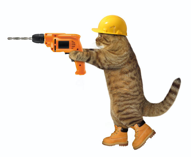 Cat worker with a drill picture id922754506?b=1&k=6&m=922754506&s=612x612&w=0&h=hy781 rmvelhzsd5eclihsrlhm gdfoxj caylmxcga=