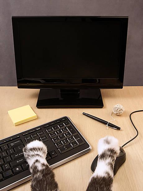 Cat working at a desk picture id182519151?b=1&k=6&m=182519151&s=612x612&w=0&h=fnbyqv4idgetl 63gerw3vqjm7wq0f6mjajfrcjgqnc=