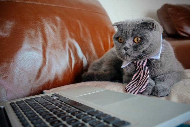 Cat working from home picture id1202731508?b=1&k=6&m=1202731508&s=612x612&w=0&h=k9ktme417wad7ltw3b5xalh3pz2fvswrqslouvmw9ly=