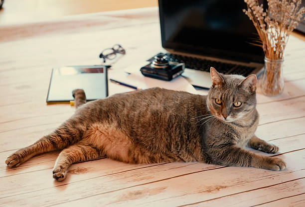 Cat working hard picture id615638170?b=1&k=6&m=615638170&s=612x612&w=0&h=eiyt9eyjb7xrn3ugj9qbg0zrltr 2nbydhh9arr0oa0=