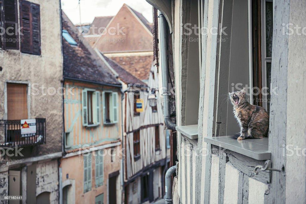 Cat yawning on window royalty-free stock photo