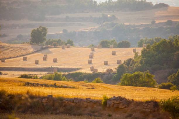 catalonian field after the summer wheat crop - лерида стоковые фото и изображения