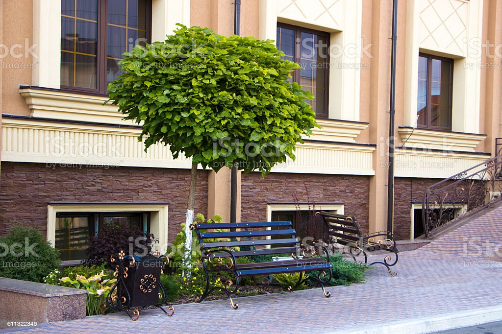 catalpa tree growing in rockeries on the building background stock photo