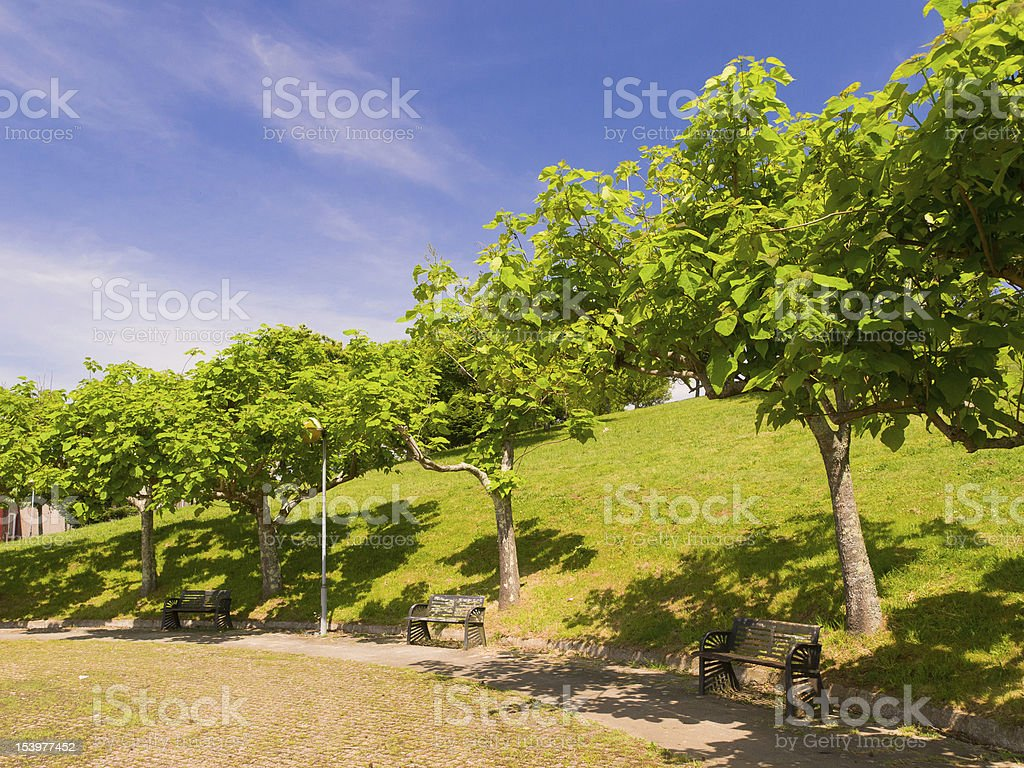 Catalpas bignonoides in Compostela park stock photo