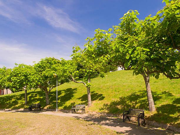 catalpas bignonoides in compostela park - trompetenbaum stock-fotos und bilder