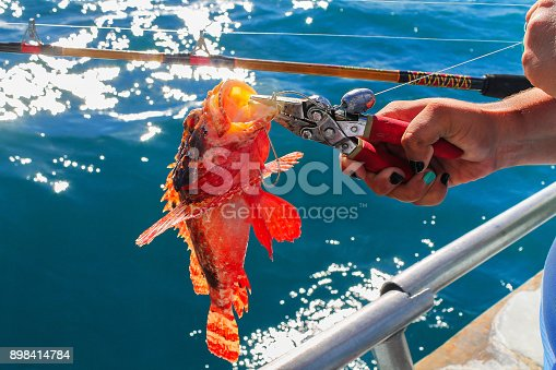 istock Catch a Fire fish 898414784