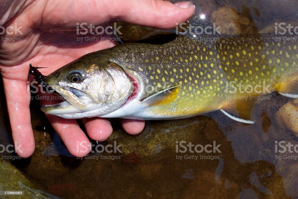 Catch and Release royalty-free stock photo