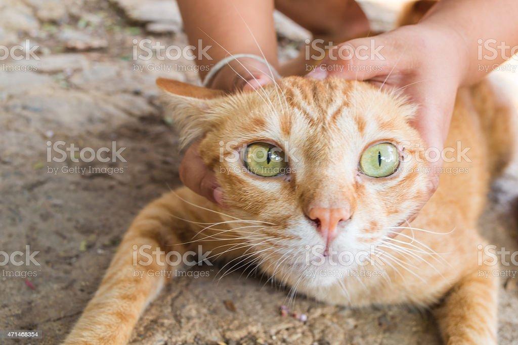 catch cat stock photo