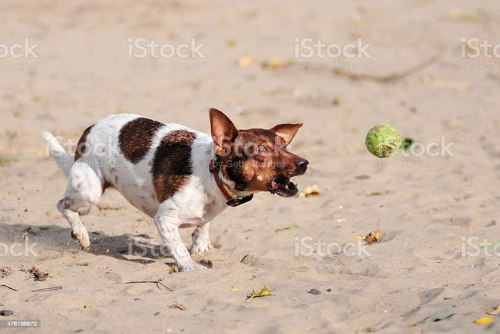 Catch me if you can - Part 1 stock photo