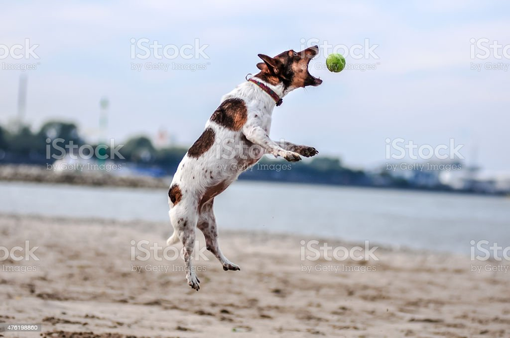 Catch me if you can - Part 2 stock photo