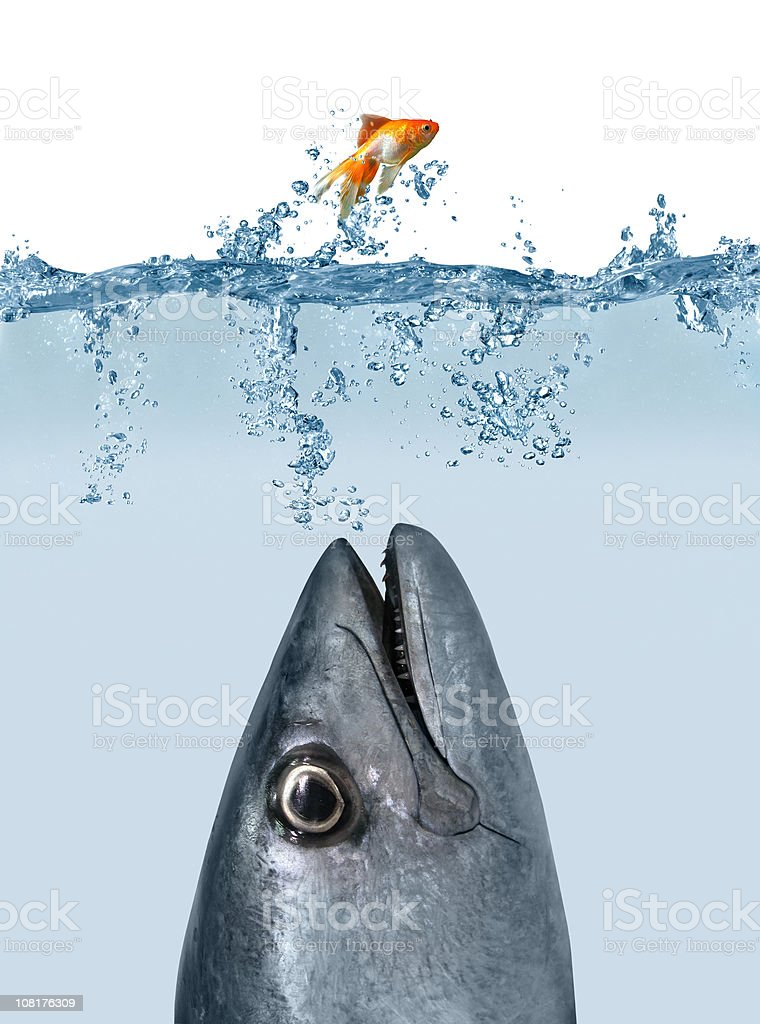 Catch Me If You Can royalty-free stock photo