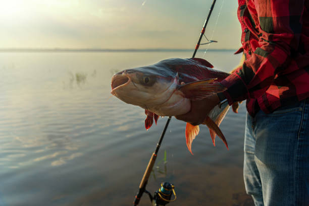 Catch of Fish A man holding out a big fish that he caught. fishing line stock pictures, royalty-free photos & images