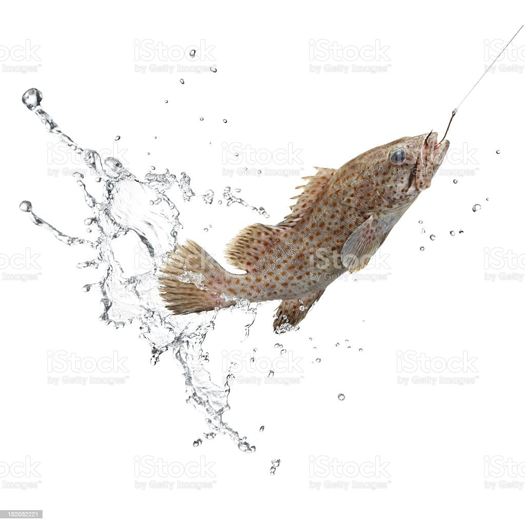 catch of fish catch of fish with water splash on white background Catch of Fish Stock Photo