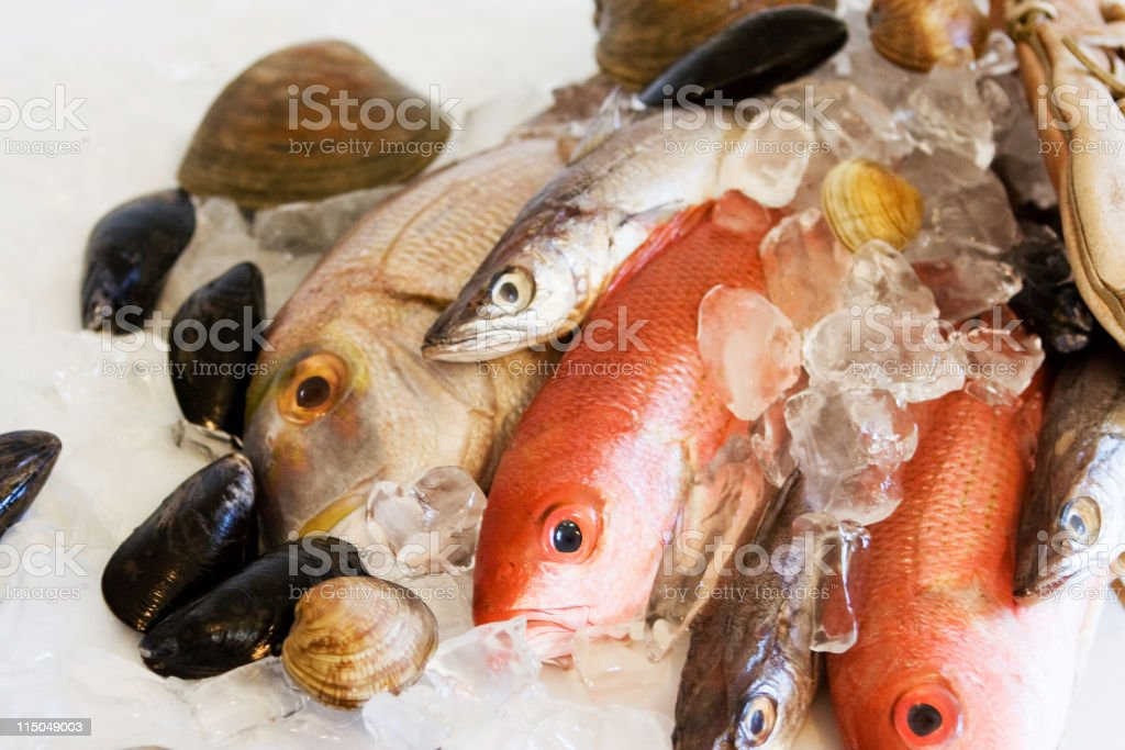 Catch of the Day Fresh Fish and SeaFoods on Ice royalty-free stock photo