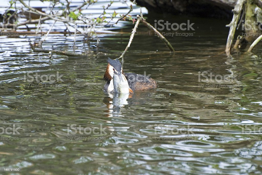 Catch of the day royalty-free stock photo