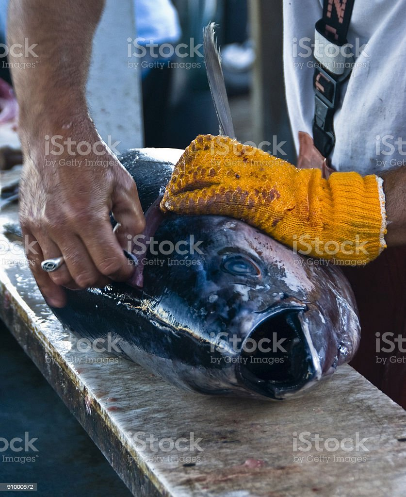 Catch of the Day stock photo