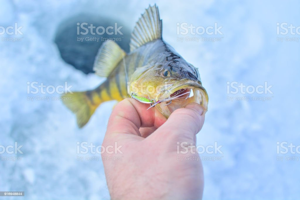 Fangen auf Eis Lizenzfreies stock-foto