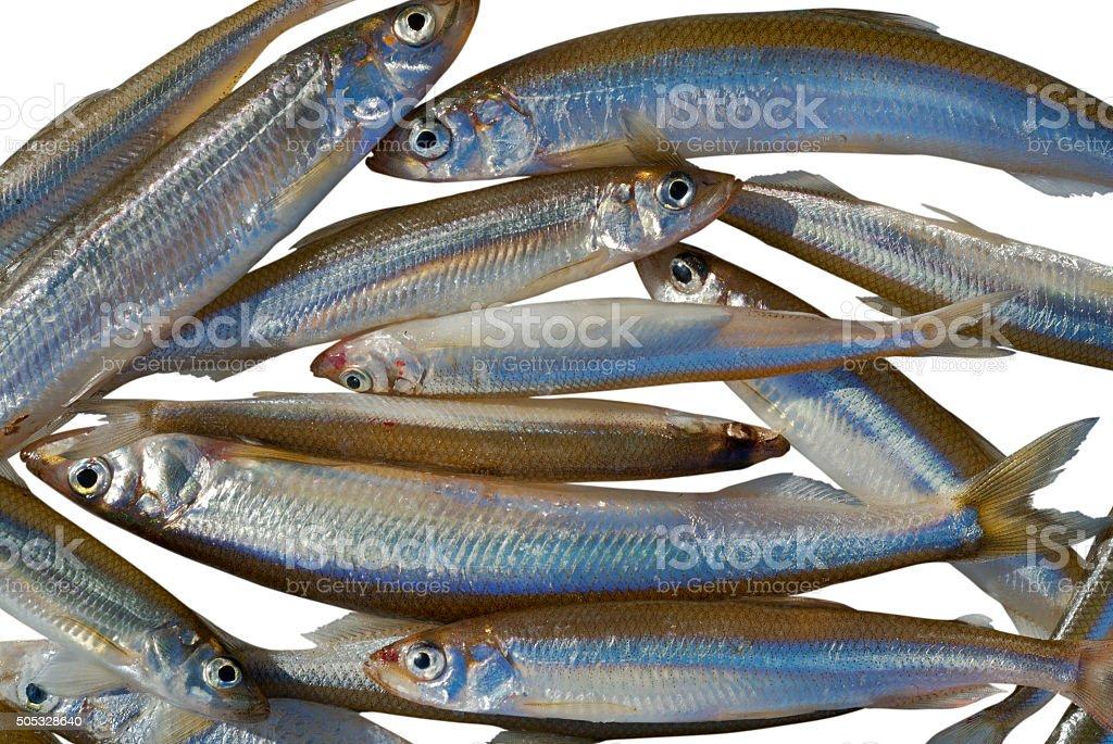 Catch on winter fishing stock photo