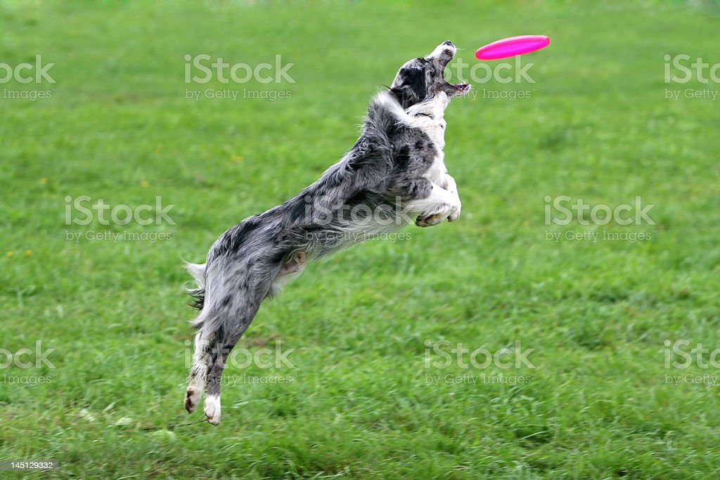 Catch! royalty-free stock photo