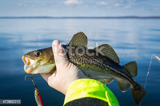 932662672 istock photo Catch the cod 472802212
