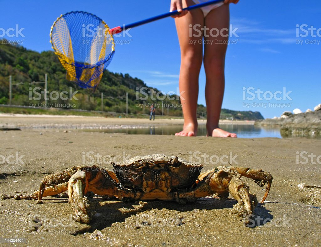 catching a crab stock photo