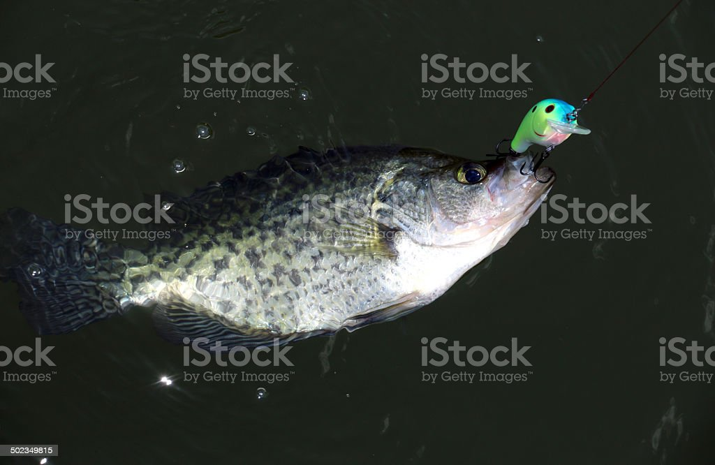 Catching a Crappie stock photo
