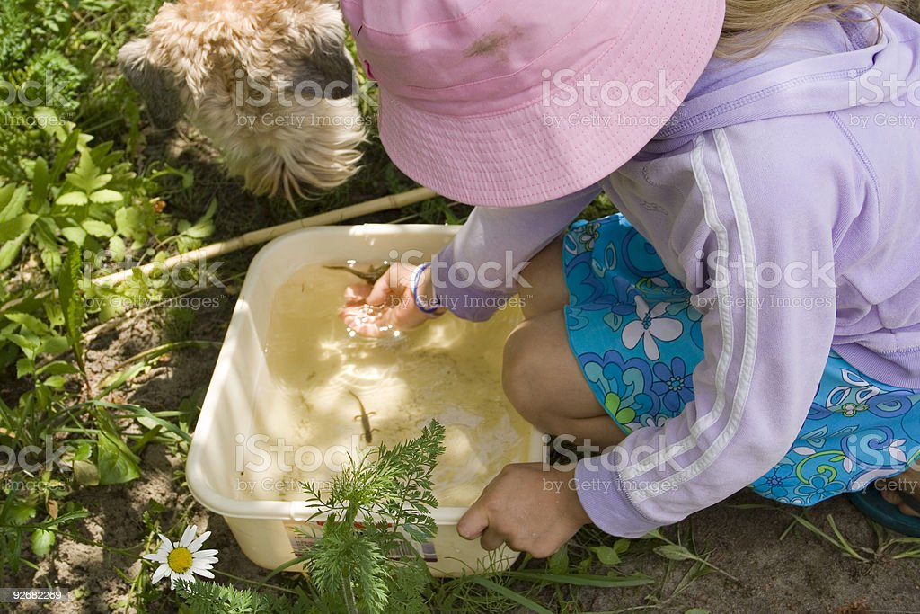 Catching Frogs + Salamanders royalty-free stock photo