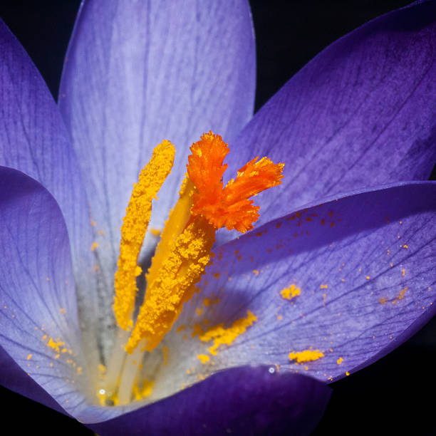 catching pollen - stamen stock photos and pictures