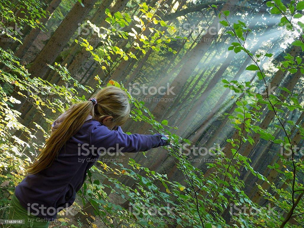 Catching sunbeams royalty-free stock photo