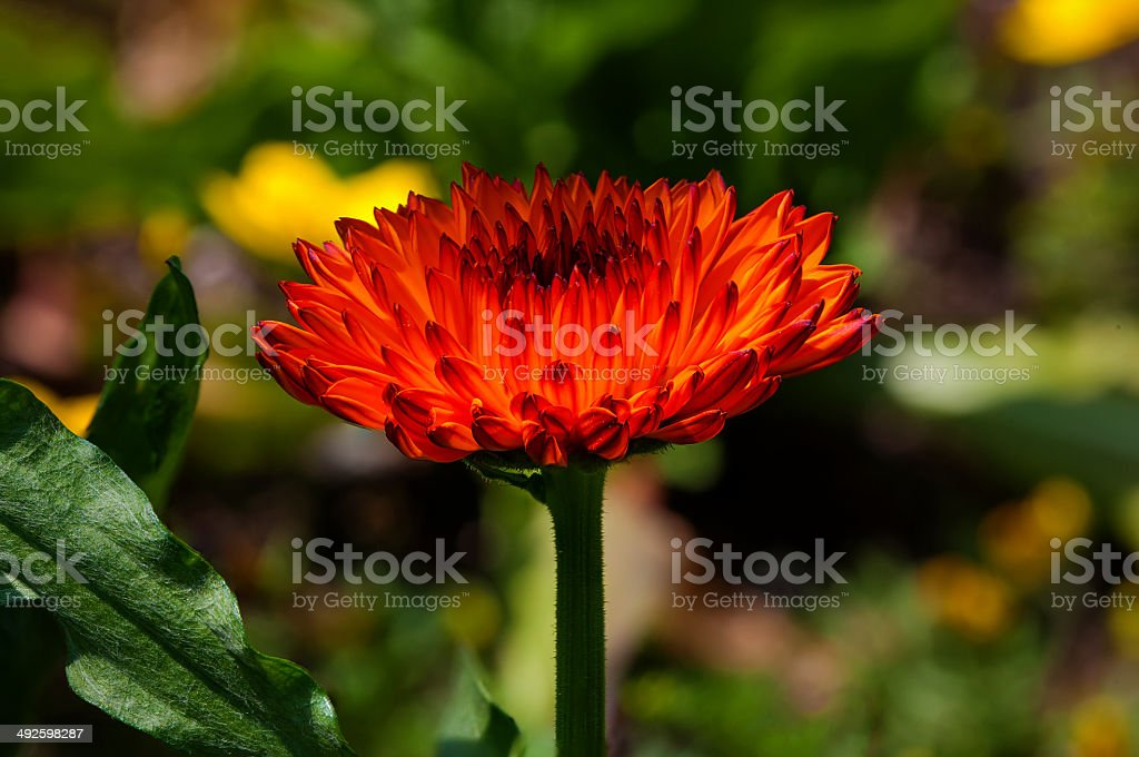 catching the sun royalty-free stock photo