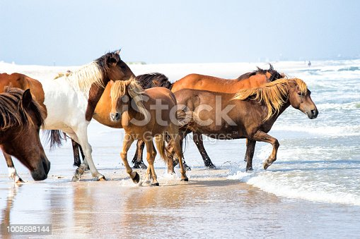 Wild horses running through the waves.