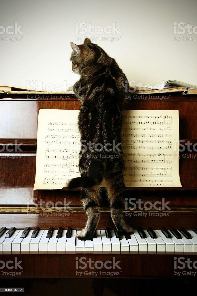 Cat-Composer stock photo