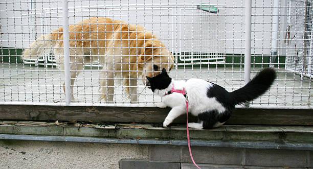 Catdog picture id517055897?b=1&k=6&m=517055897&s=612x612&w=0&h=q85rrgmnk9xxusabykdowqfdp51goezy9 ocipwzvjw=