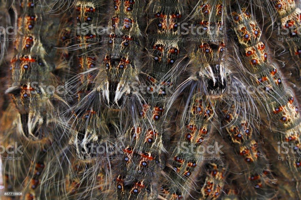 Caterpillar background stock photo