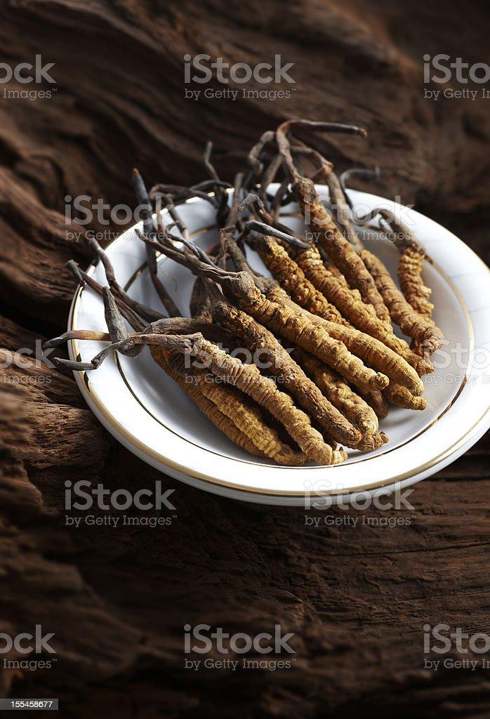 caterpillar fungus stock photo