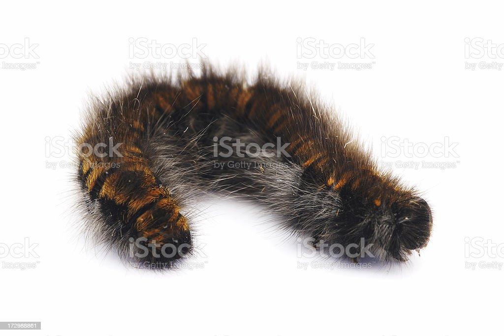 Caterpillar isolated royalty-free stock photo