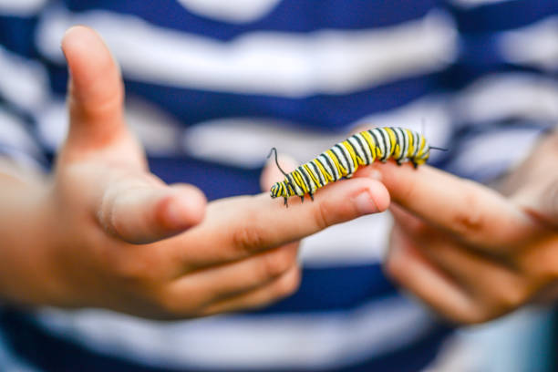 garoto de caterpillar - lagarta - fotografias e filmes do acervo