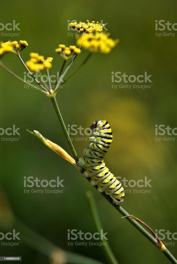Caterpillar lifts his head royalty-free stock photo