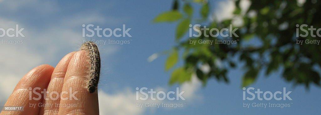 caterpillar on a finger stock photo