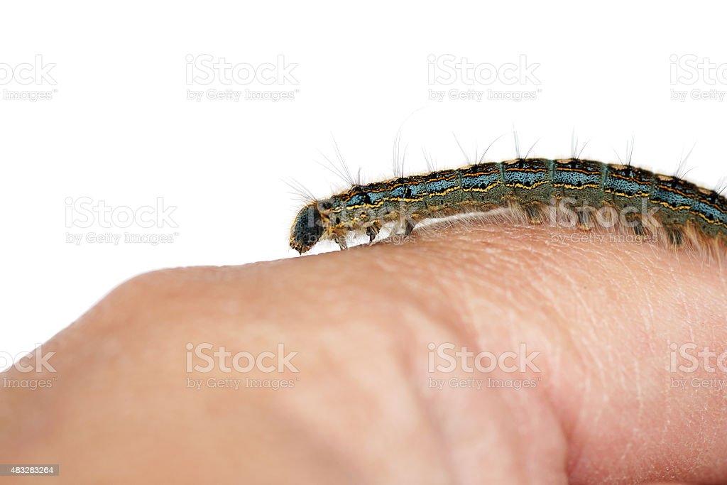 Caterpillar on hand stock photo