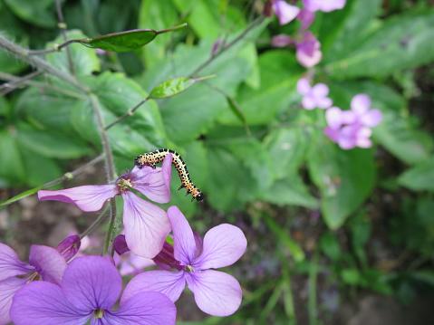 Caterpillar On Purple Flower