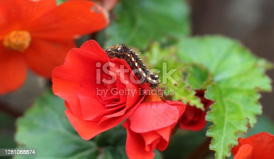 istock Caterpillar On Red Flower 1281088874