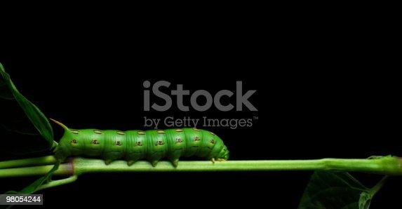 Caterpillar On Stem Stock Photo & More Pictures of Caterpillar