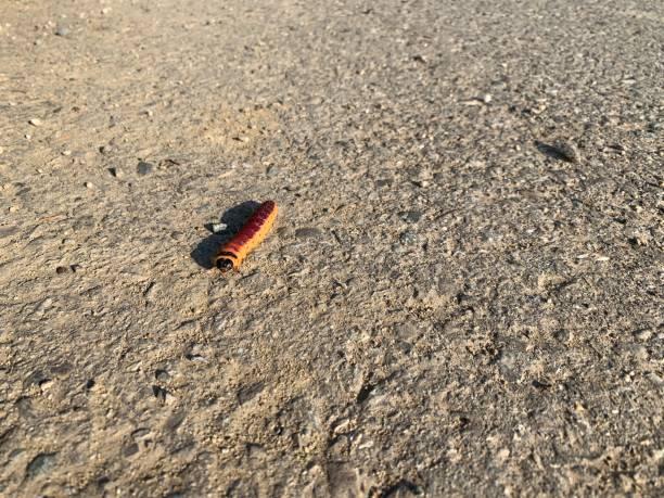 A caterpillar stock photo