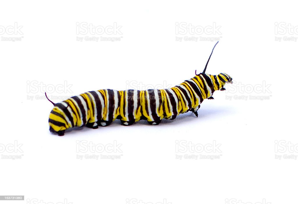 Caterpillar - foto de acervo