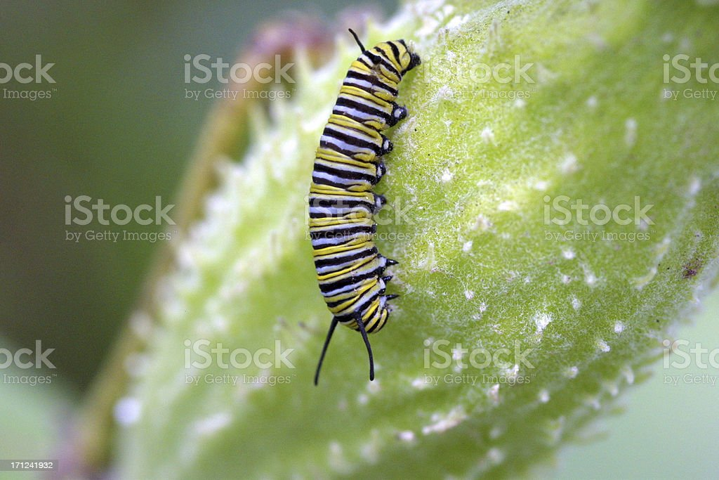 Caterpillar royalty-free stock photo