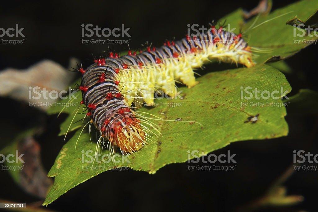 Caterpillar royalty-free stock photo