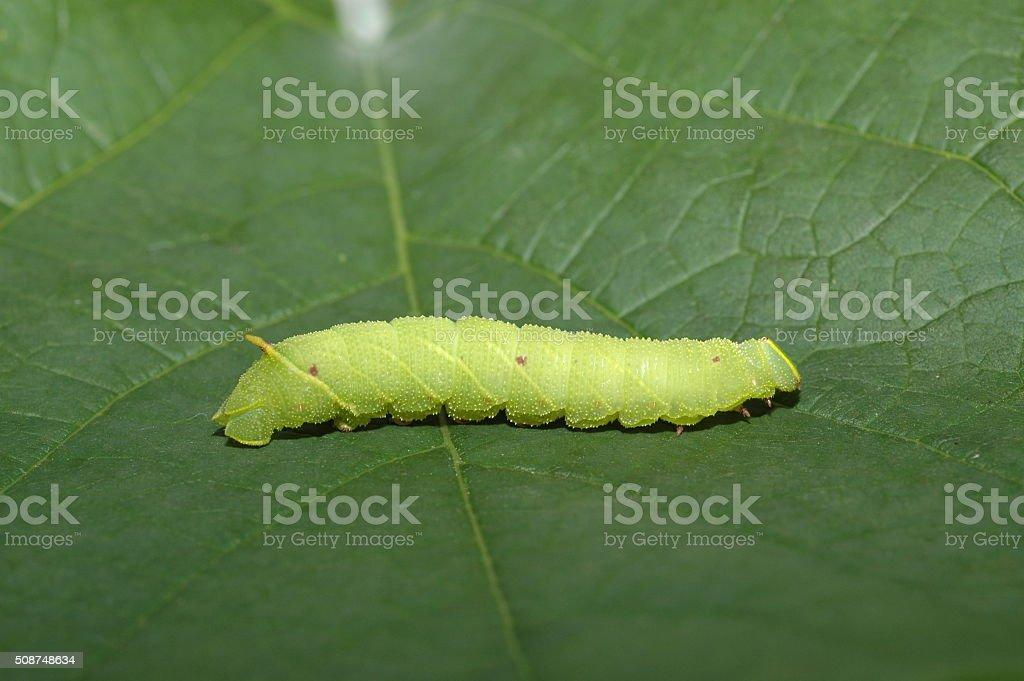 Caterpillar – Foto