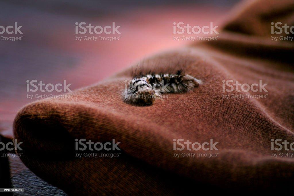Caterpillar. A lagarta em um material têxtil, detalhe, close-up. Foco suave de lagarta-da-seda em um material têxtil. (Foco seletivo) foto royalty-free